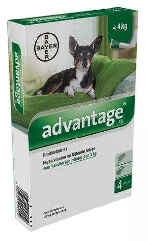 Bayer advantage hond 4 pipetten (40 TOT 4 KG 4 PIP)