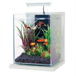 Zolux aquarium kit jalaya antique wit (22X23X34,5CM 9,3 LTR)
