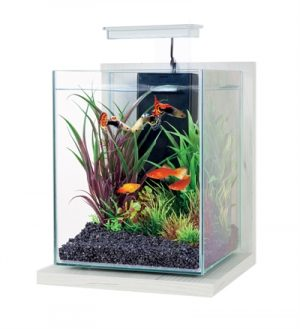 Zolux aquarium kit jalaya antique wit (22X23X34,5CM 9,3 LTR)