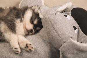 Beeztees puppy knuffel boomba grijs (70X40 CM)
