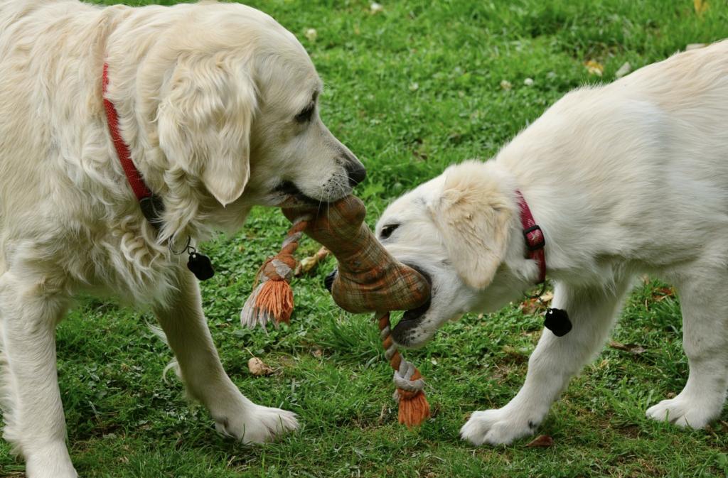 Speelgoed honden