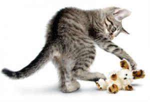 Kong cat softies fuzzy bunny assorti (11X4X15,5 CM)